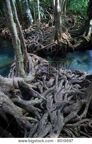 River in mangroves