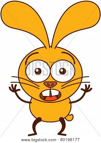 Cute yellow bunny looking surprised and scared