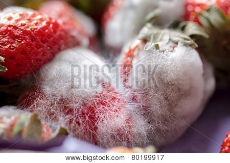 Great Mould On Strawberries