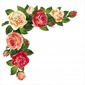 stock photo of swag  - Roses garland isolated on white - JPG