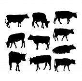 image of vertebrate  - cow set black silhouette on white background - JPG