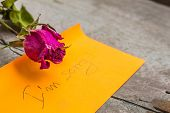 picture of condolence  - Rose of a condolences on the table - JPG