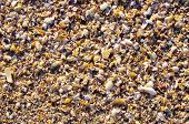 image of snail-shell  - Mussel shells and snails on the beach closeup - JPG