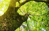 picture of green leaves  - the sun - JPG