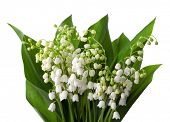 stock photo of white lily  - Lilies of the Valley with leaves   isolated on a white background - JPG