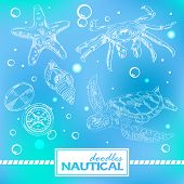 stock photo of turtle shell  - Set of nautical doodles with turtles - JPG