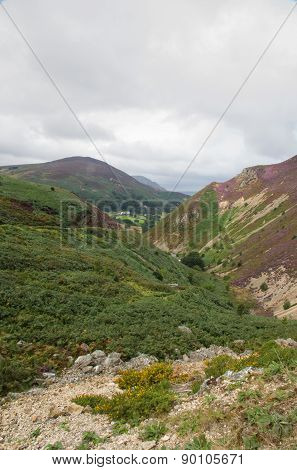 Sychnant Pass, United Kingdom Mountain Valley. Fern And Heather.