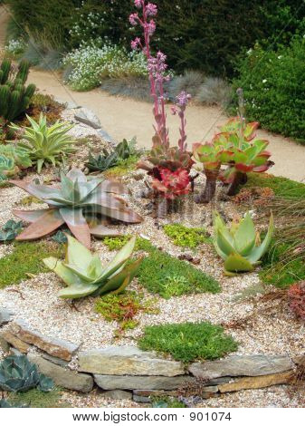 Sukkulenten-Garten