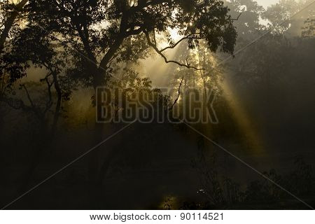 sunlight through sal trees, Bardia, Nepal