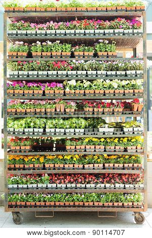 Shelves Full Of Potted Seedlings In A Nursery