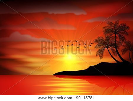 Silhouette of bird with sunset