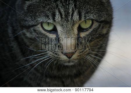 Cat's Stern Gaze