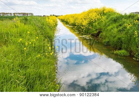 Small And Mirror Smooth Stream In Springtime