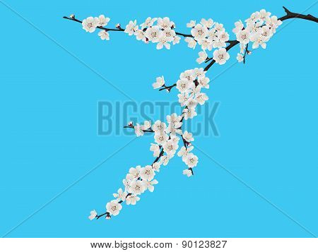 Spring Blooming Cherry Branch