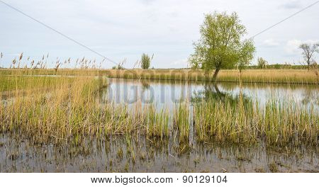 The shore of a river with reed in spring