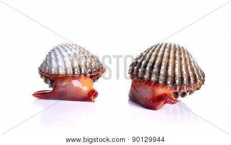 Fresh Raw Cockle On The White Background