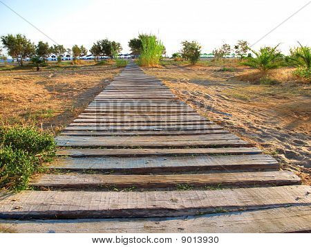 walkway of planks