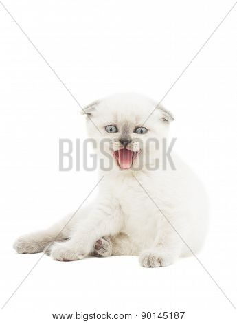 Funny Kitten Mews