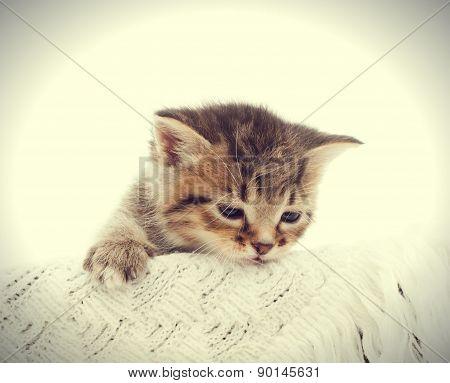 Funny Kitten On The Bedspread