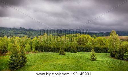 Rainy Weather Over Forest