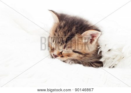 Small Kitten Sleeping
