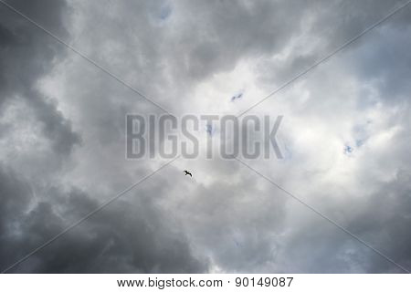 Bird flying into deteriorating weather in spring