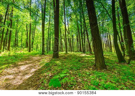 Green Springtime Forest
