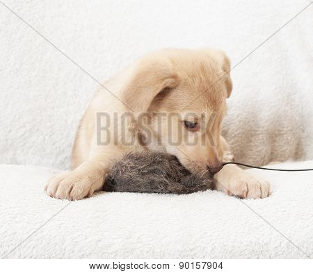 Puppy With Toy Prey