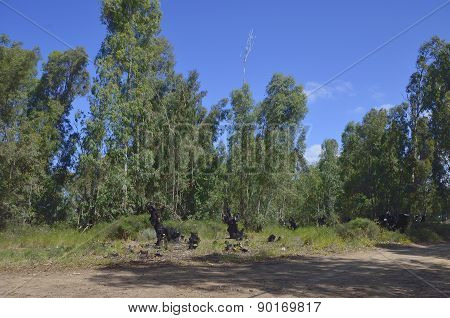 Forest Conflagration