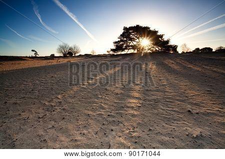 Sunshine On Sand Dunes