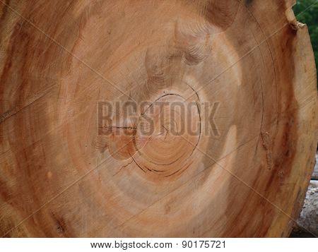 Black Oak Textures