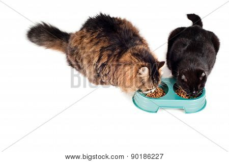 Two cats eating from a green bowl