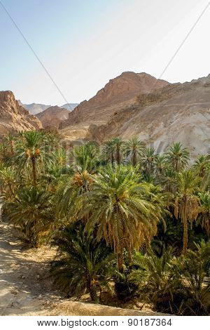Mountain Oasis Chebika In Tunisia