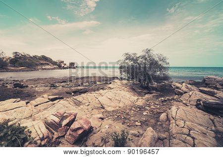 Beach Tree And Blue Sea Vintage