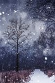 stock photo of storms  - Snow storm in a forest abstract winter background - JPG