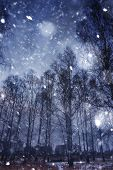 pic of storms  - Snow storm in a forest abstract winter background - JPG