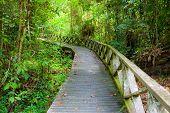 picture of rainforest  - Boardwalk in dense rainforest in niah cave malaysia borneo - JPG