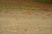 picture of board-walk  - Road grass board side view of path - JPG