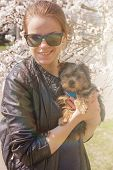 foto of yorkshire terrier  - Yorkshire terrier puppy in the hands of the girl - JPG