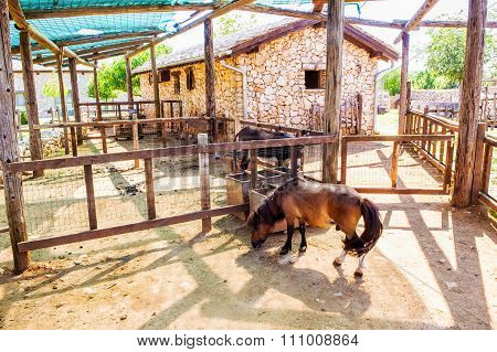 Farm Animals On Farm In Summer