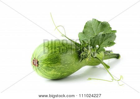 Courgette; Zucchini With Leaf.