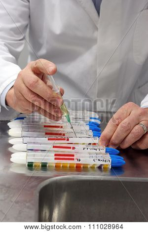 Scientist hands holding syringe performing microbiological strain identification test in laboratory.