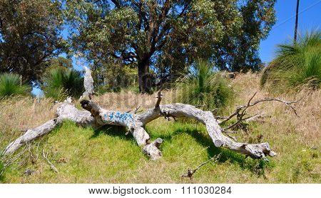 Tagged Fallen Tree in Australian Bush