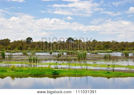 Beelier Wetlands: Wildlife Reserve