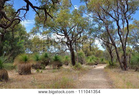 Bibra Lake Reserve: Western Australia