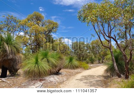 Bibra Lake Reserve: Peaceful Path