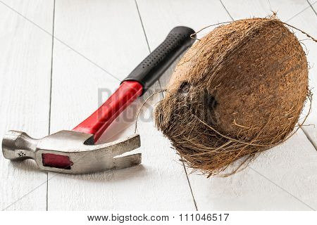 Coconut And Hammer