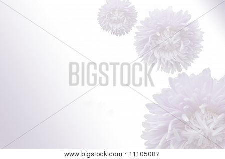 Light Violet Floral Background