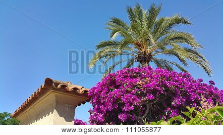 Palm Tree, Bougainvillea Bush And Traditional Spain Architecture