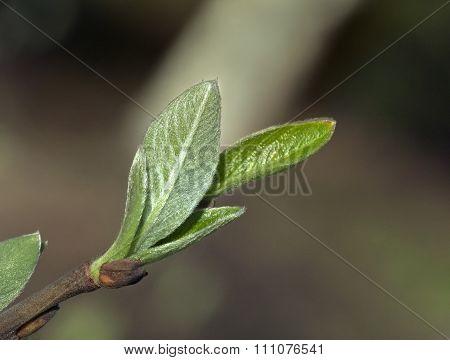 Spring leaves, macro shot
